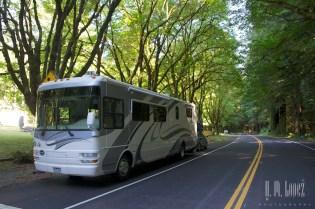 north redwoods  003