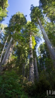 north redwoods  043