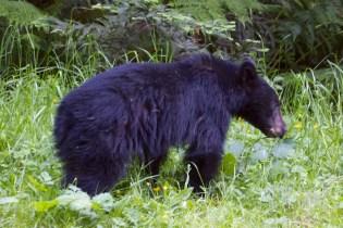 north redwoods  049