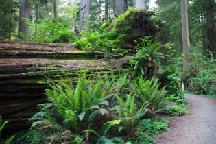 north redwoods  071