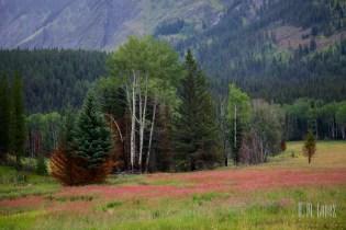 Banff  034