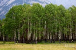 Banff  037