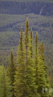 Banff  160