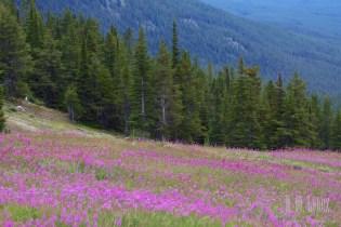 Banff  170