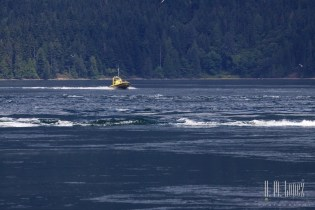 Campbell River  034