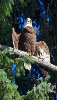 Campbell River  075