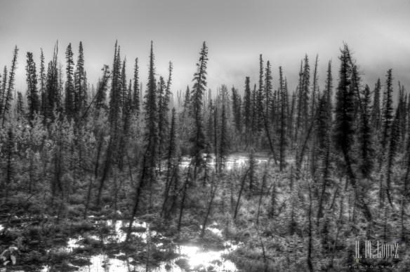 Arctic 22