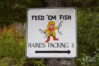 Haines 8