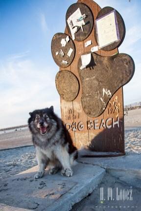 Doggie's rule