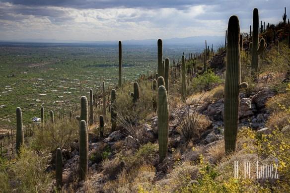 Tucson-89