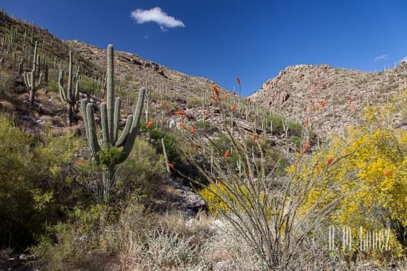 Tucson-90