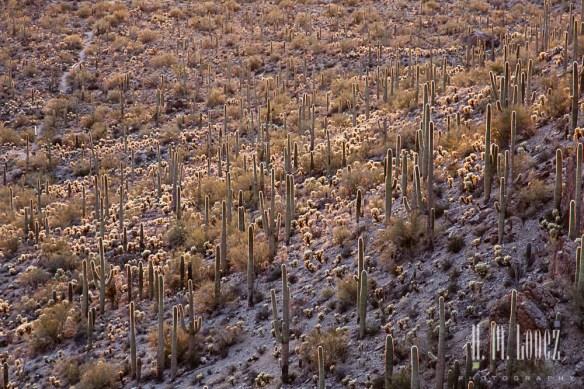 sonoran desert-10