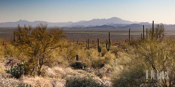 sonoran desert-18