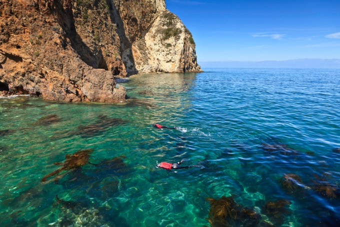 Interested in snorkeling in California? Come visit the Channel Islands National Park and experience snorkeling the kelp forests at Santa Cruz Island.