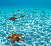 Snorkel with the St. John Starfish
