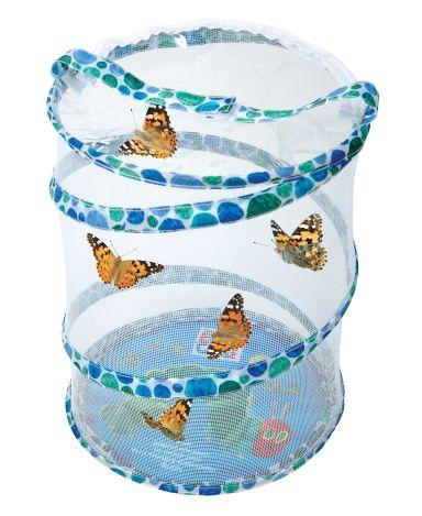 butterfly grow kit