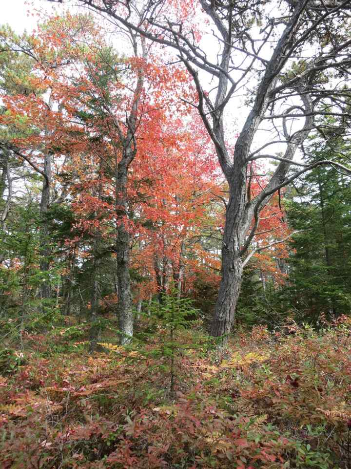 Mt Champlain autumn