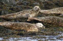 sandra-jo-and-the-seals-028