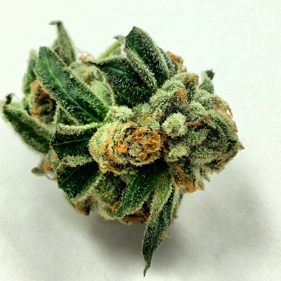 , Stoner Picture of the Month – August