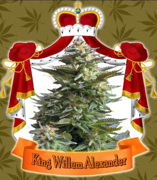 , New Dutch King Willem-Alexander has his own cannabis strain