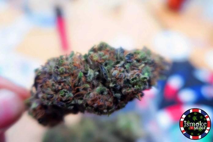 top 5 cannabis strains 2016, ISMOKE Top 5 Cannabis Strains 2016