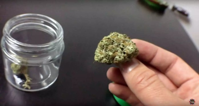 Stardawg Strain Review, Stardawg Strain Review