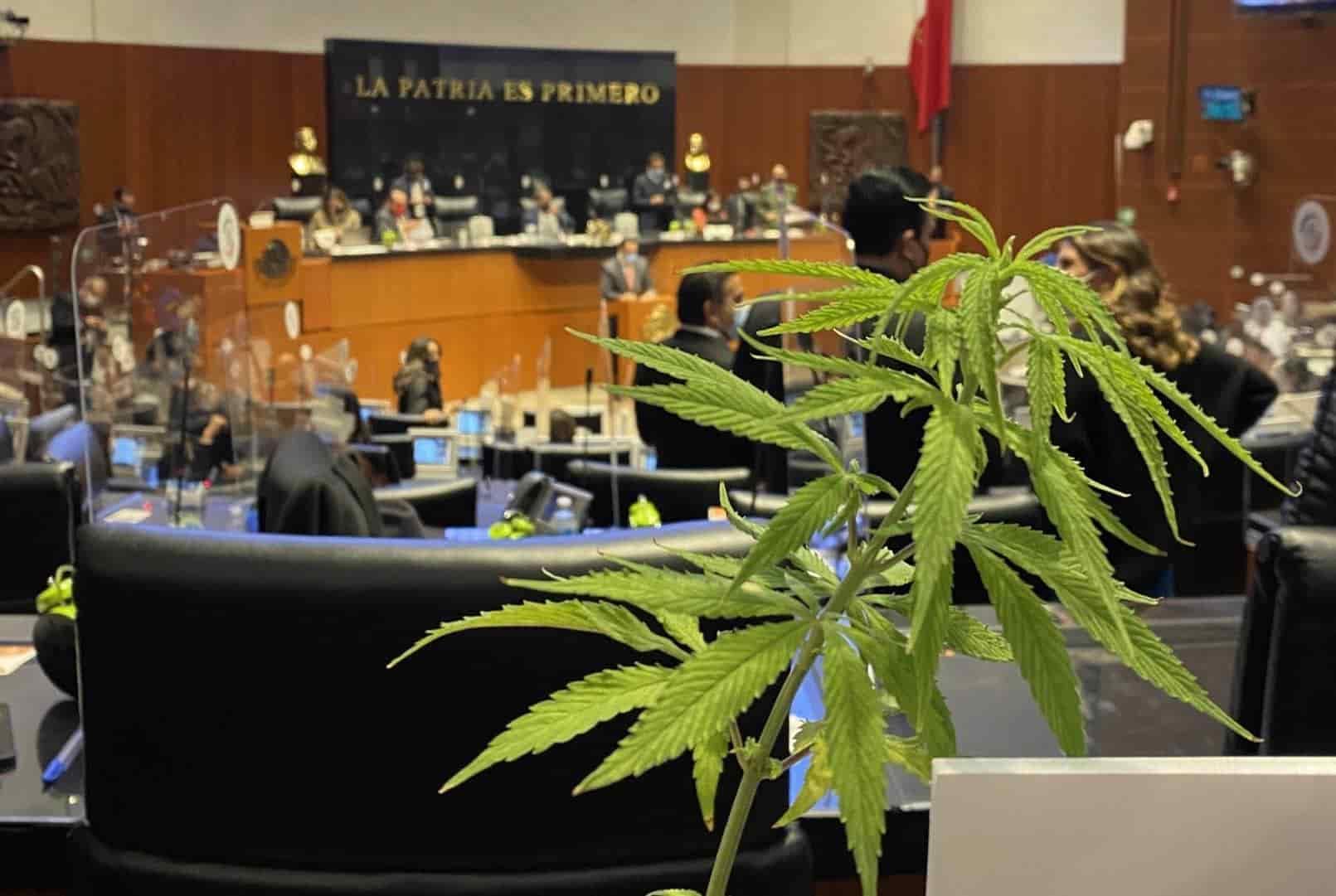 México: Senado aprueba ley que despenaliza el consumo y la producción de marihuana