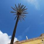 Asinara Cala D'Oliva - la palma piantata il giorno del battesimo di Gianfranco Massidda