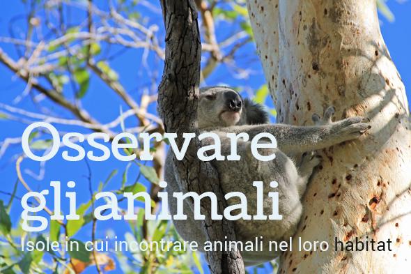 osservare fauna