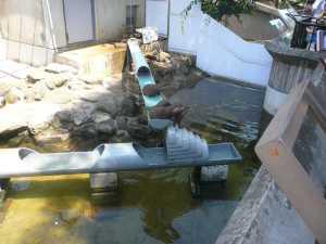 市川市動植物園のカワウソ
