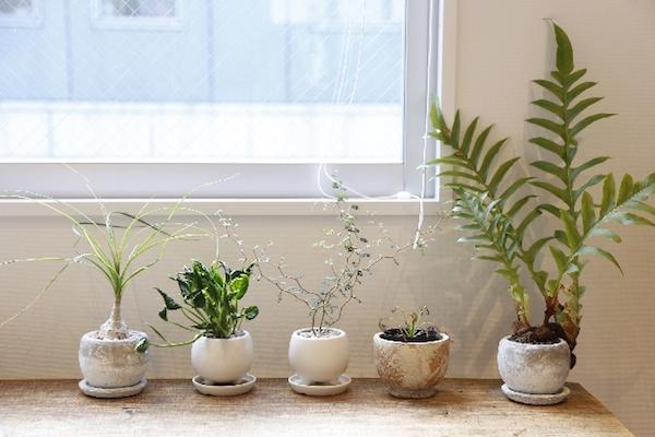 長期不在留守でも植物への水やりを忘れない