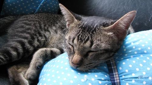 抱き枕カバーの処分方法について考えよう