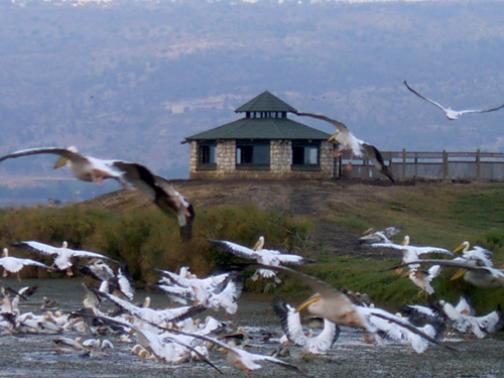 Pelican Observatory