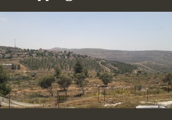 Rolling hills of Samaria