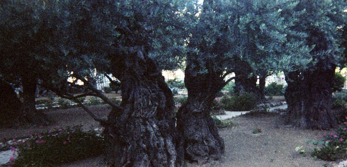Image result for images of the garden of gethsemane