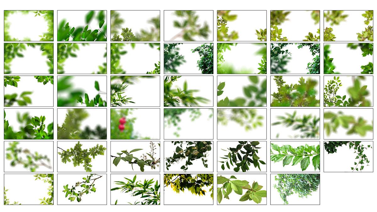 Superposiciones de ramas