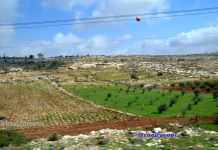 image new planting by Arabs to claim land