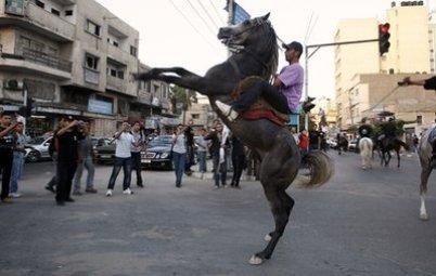 Gaza horse
