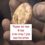עונה 8 פרק 1 צפייה ישירה The Curse of Oak Island season 8