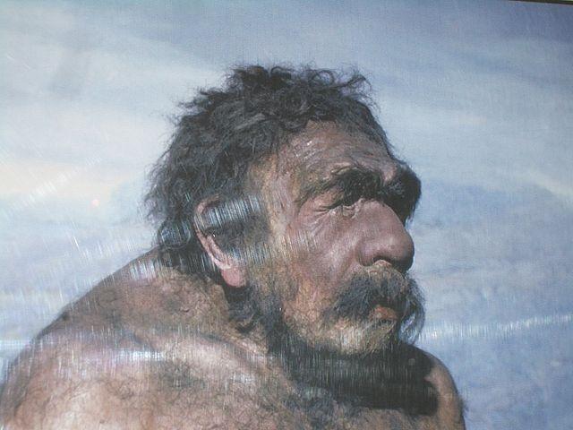Типичный неандерталец. Такое ощущение, что мы его где-то встречали... Чикагский музей. Фото: Wikipedia, Карма2