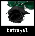 Betrayed Black Rose