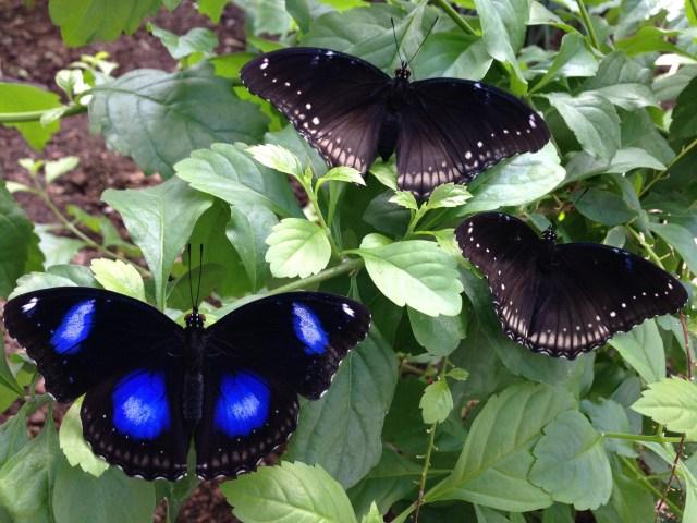 zerzevatçı köyü kelebek çiftliği ile ilgili görsel sonucu