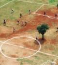 Copacul din Sao Paolo