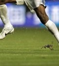 Costly - frog