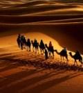 camel-caravan-01
