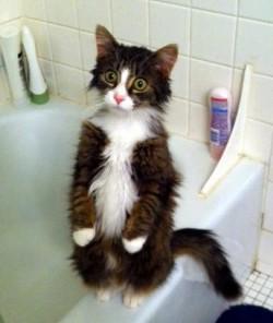 pisica speriata