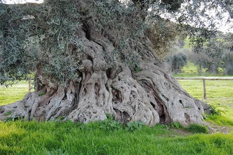 La Sardegna, terra millenaria incastonata tra il mare e gli olivi