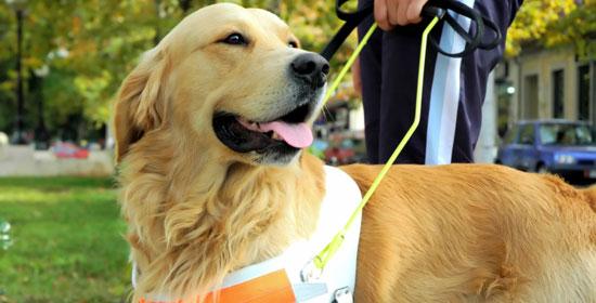 Hotel rifiutano l'accesso ai cani guida: la FISH scrive al Ministro Franceschini