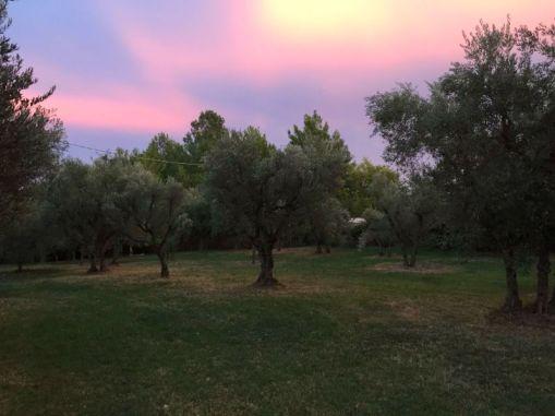 Het huis ligt in een olijfboomgaard