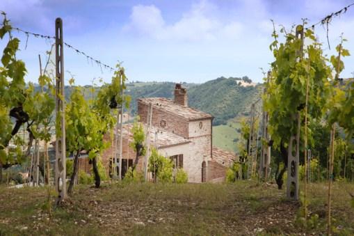Het terras grenst aan de wijngaarden
